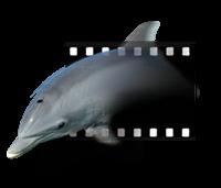 Delfin Studio